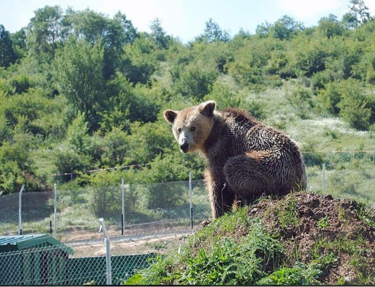 Kosovo Bear in the bear park